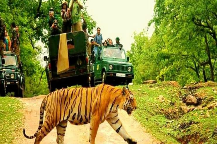 tiger safari pench