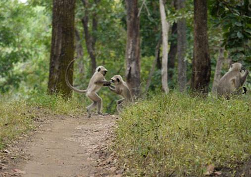 Wildlife_Image